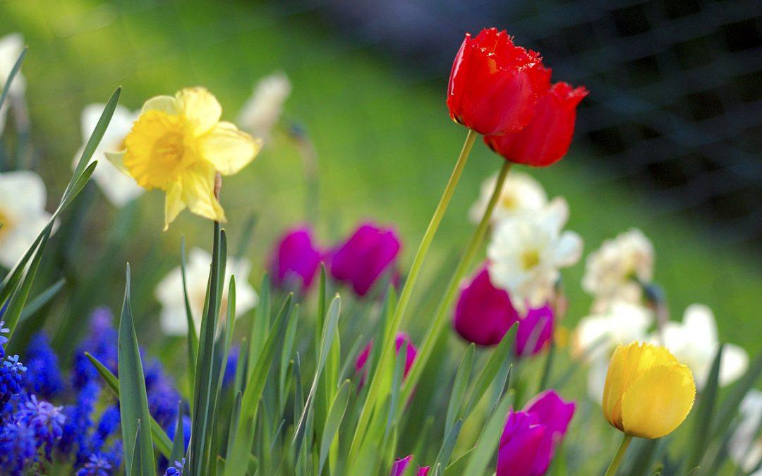 Don't miss the TRLA Spring Social!